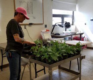 HCC student transplanting plants