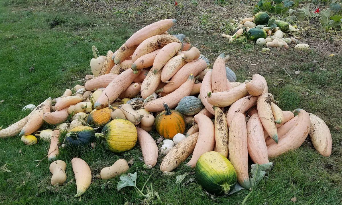 Pile of squash